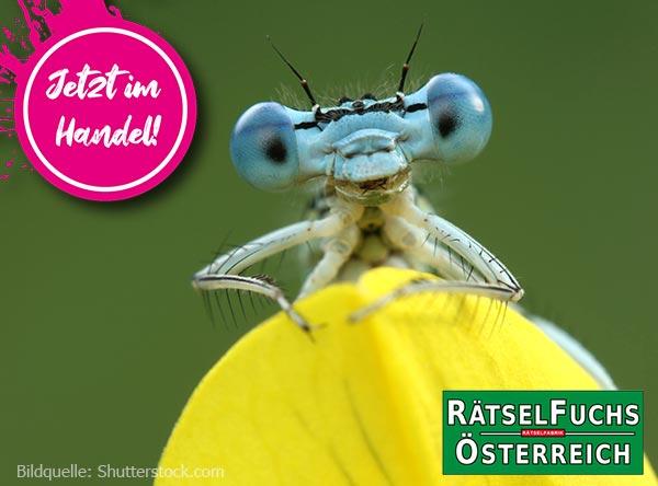 Rätselfuchs Österreich mit dem Thema Wunderwelt der Insekten jetzt im Handel